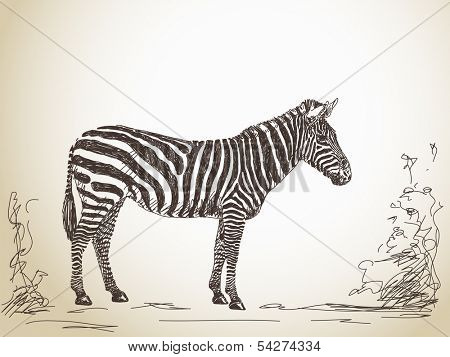 Sketch of zebra Vector