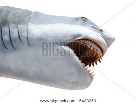 Shark Isolated Over White Background
