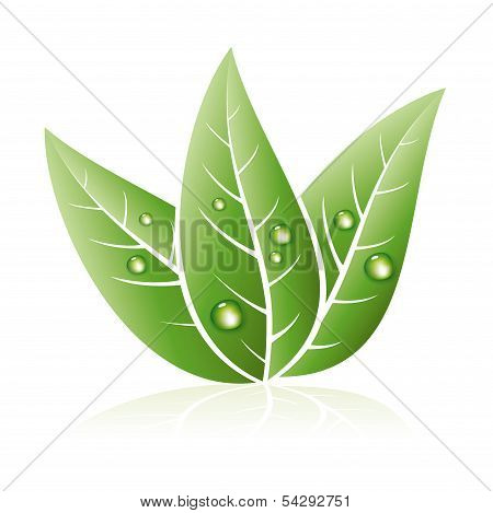 Vector Eco Symbol Of Green Grass Leaves