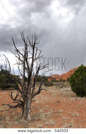 Deserto de velha árvore