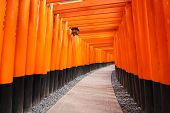 stock photo of inari  - A walking path leading through a tunnel of torii gates at Fushimi Inari Taisha temple in Japan - JPG