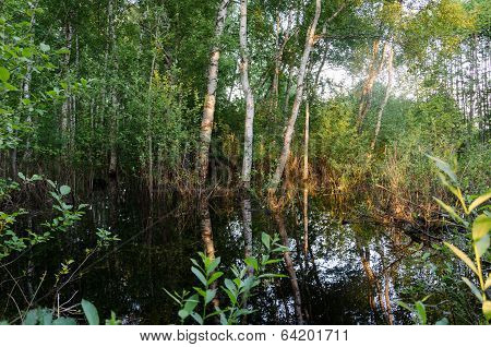 Flooded Forest Trees Sunset Reflections On Water