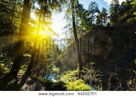 Spring summer green forest with sunrays