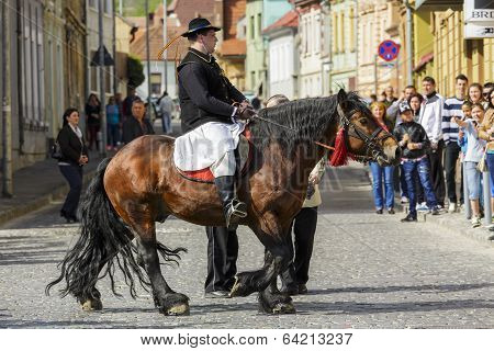 Rider On Brown Dray-horse