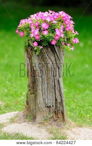 Beautiful Petunia Flowers Grow On A Stump