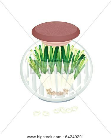 Delicious Pickled Fresh Leek In A Jar