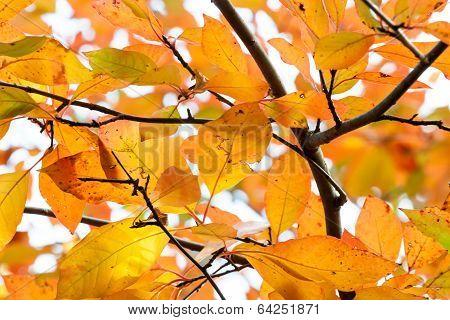 Rain Damaged Orange And Yellow Autumn Leaves