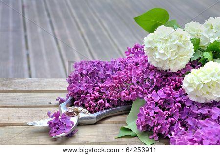Flower On Terrace
