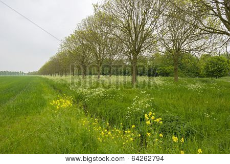 Ditch with wild flowers along trees in spring