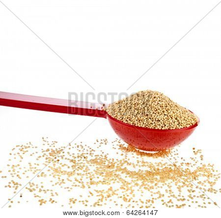 Amaranth popping, gluten-free, grain cereal in scoop close up isolated on white background