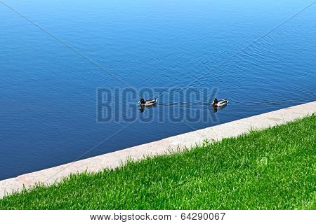 Two Ducks On The Lake