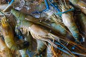 stock photo of crawfish  - Fresh crawfishes on the market in Thailand - JPG
