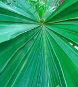 Tropical Palm Leave Design poster