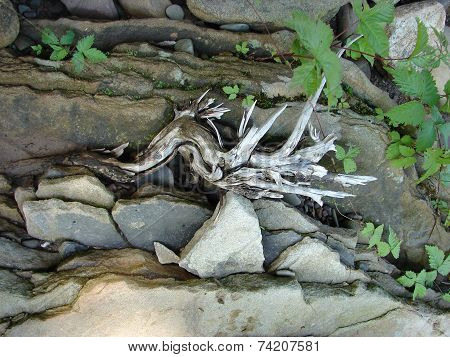 Driftwood and rocks