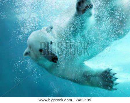 Polar Bear Underwater Attack