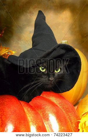 Black Cat Witch