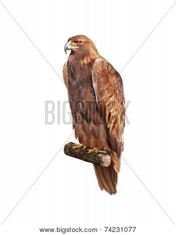 golden eagle, Aquila chrysaetos, orel skalni