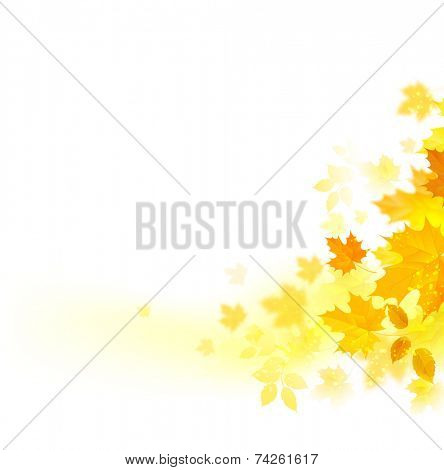 autumn decoration composition with maple leaves