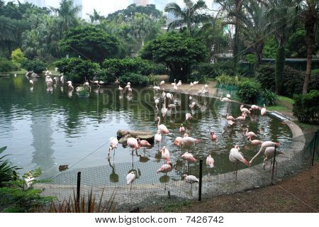 Flamingo zwembad in park