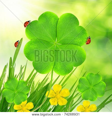 clover leaf and ladybugs