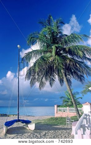 Palm Tree And Catamaran