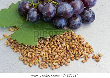 Garpe Seed