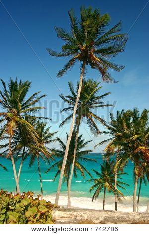 Palm Trees At Bottom Bay