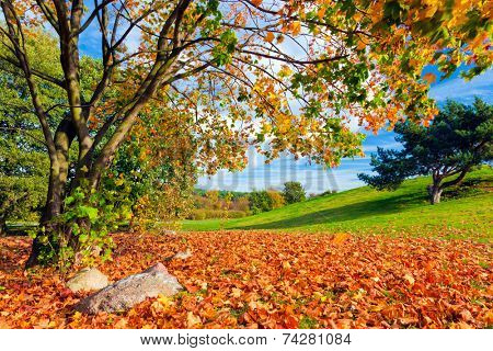 Autumn, fall landscape with a tree full of colorful, falling leaves, Green hill in the background.