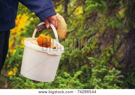 Man hand holding Mushroom pail fresh picked organic food