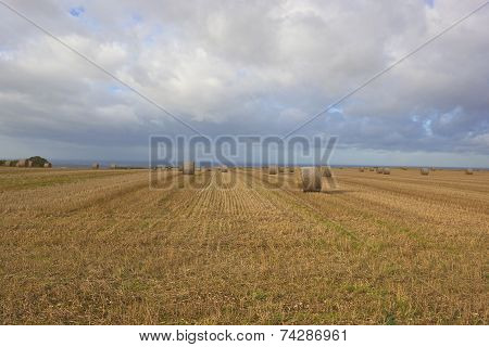 Autumn Straw Bales