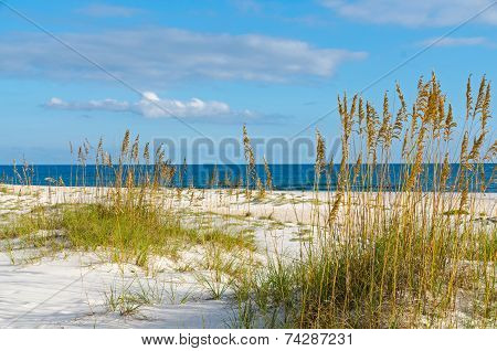 Gulf Coast Scenery