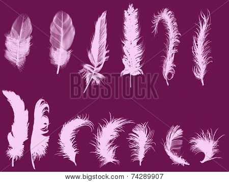 illustration with thirteen feathers isolated on dark pink background