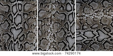 Snakeskin Leather Textures