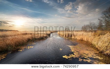 Dry reeds on the river