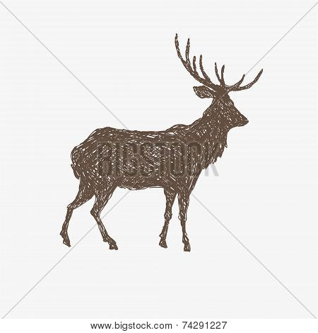 Deer hand drawn isolated on a white backgrounds