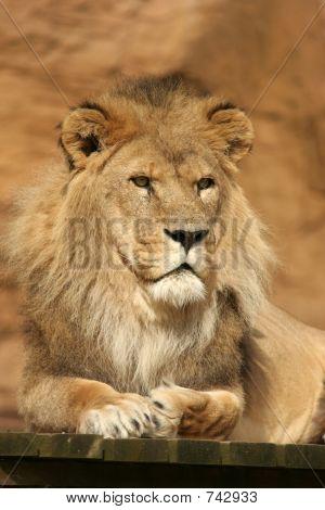 León posando