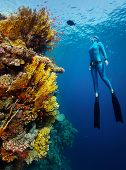 pic of bottomless  - Underwater shot of the lady free diver in wet suit ascending along the vivid coral reef wall - JPG