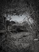 picture of conic  - Conical Mountain Through Branch Picture Frame San Pedro Chile - JPG