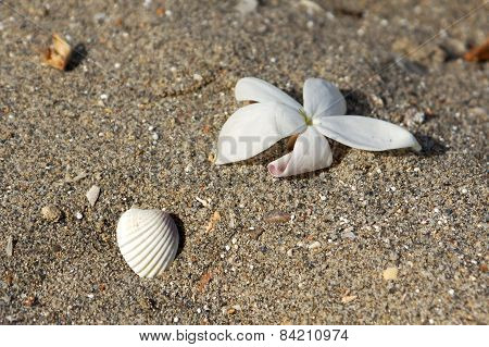 Flower And Shell In The Sand On The Beach