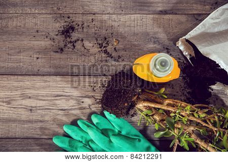 High angle shot of a group of items for potting and planting seeds. Wooden table