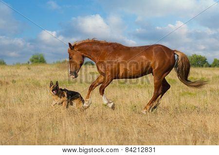 Horse and dog ru