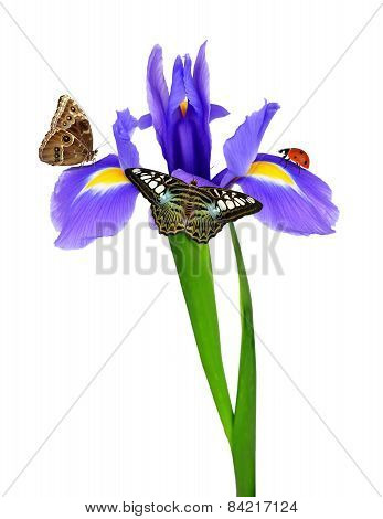 purple iris flower with butterflies and ladybug