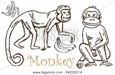 Monkey And Bananas Drawing