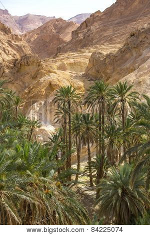 an oasis in the Atlas Mountains