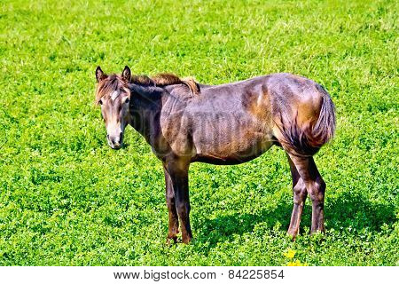 Horse brown on green grass