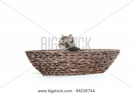 Cute Tabby In Boat