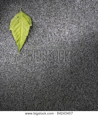 Leaf On Asphalt