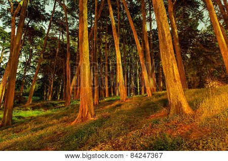 Forest Of Trees At Night With Shadows