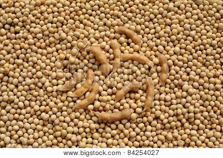 Agriculture, Soybean After Harvest