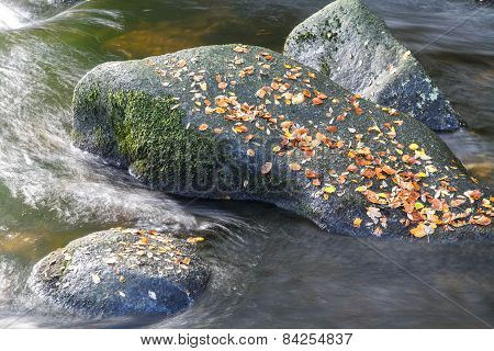 Autumn Fall Brown Leaves On Boulder In Stream.